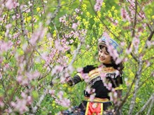 Peach blossoms in Sapa enthral visitors