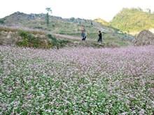 Beauty of Ha Giang
