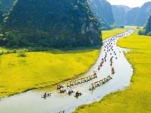 Alluring Tam Coc in ripe rice season