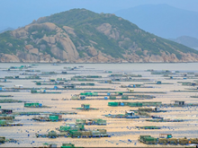 Commercial lobster farming on Binh Ba island