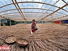 Hon Mu, a nature inspired startup