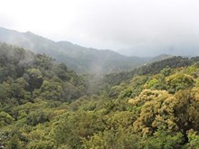 Bach Ma National Park: the 'sleeping beauty' of central Vietnam