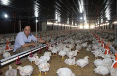 Vietnamese poultry sector seeks export