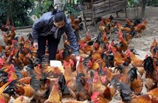 Vietnam to organize int'l conference on disease prevention