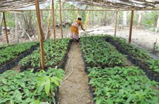 Singapore, Indonesia boost agricultural cooperation