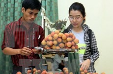Bac Giang earns trillions of dong from lychee