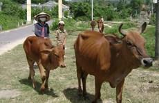 Phu Yen strives to reduce poverty sustainably