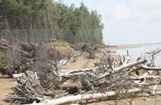 Ca Mau makes drastic efforts to protect coastal resources