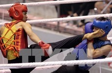 Vietnam-RoK Professional Boxing Tournament to open in October