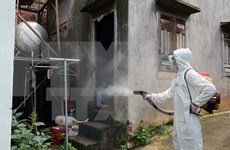Southern provinces share dengue prevention experience