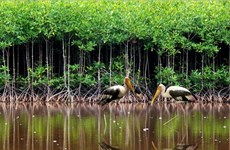 Vietnam focuses on coastal eco-system, mangrove forest protection
