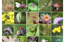 Thailand to establish biodiversity property bank