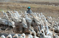 Ninh Thuan requested to enhance precautions against A/H5N1