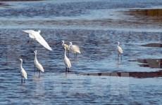 Project seeks to conserve wetlands, linked landscapes