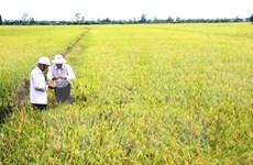 Vietnam's agricultural achievements significant: FAO representative