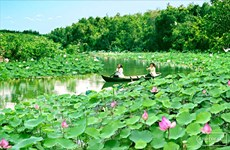 Floating in paradise of lotus