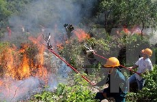 More than 8 mln USD given to fund forest fire control