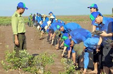 Ben Tre to plant submerged forests