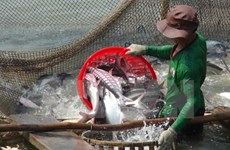 Regulations on Tra fish to be amended