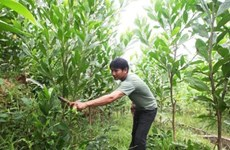 Preferential interest comes to forest planters and farmers