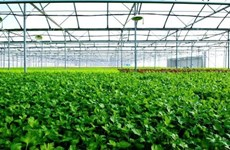 First farm in Vietnam receives US, EU organic certification