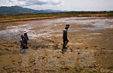 Mekong delta faces water shortage, saline intrusion