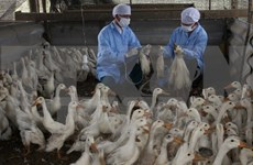 Health sector warns of renewed bird flu threat