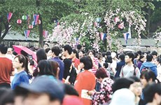 Japanese cherry trees to bloom in Hanoi