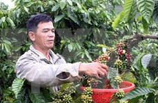 Vietnam's instant coffee exports on upswing
