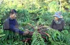 Agro-fishery-forestry exports may meet yearly target