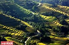 Terraced fields - a man-made wonder