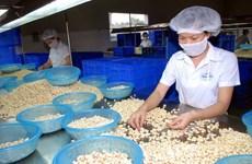 Cashew export revenue in 11 months surges over 19 percent