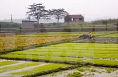 Agricultural sector seeks stronger international cooperation