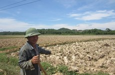 Drought hits Vietnam's southern localities