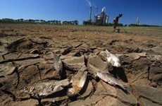 Rice production in Southeast Asia suffers from El Nino