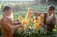 Da Lat Flower Festival: 126 flower growers honoured