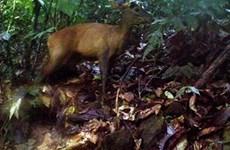 Rare animals found in Pu Hu Nature Reserve