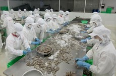 Shrimp export to US expected to thrive