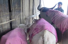 Post cold-spell efforts urged at recovering livestock numbers