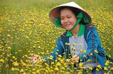 Tour of flower fields launched in Dong Thap