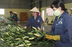 Flower industry needs tech growth