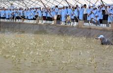 Binh Dinh to develop high-tech shrimp farming