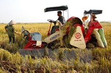 Hau Giang records lowest rice production cost in Mekong Delta