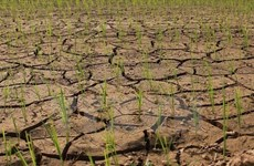 Deputy PM directs south-central region to prevent drought