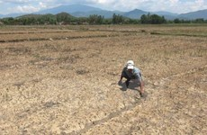Saltwater intrusion worries Mekong Delta farmers