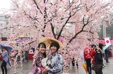 Hoa Binh Park to have 200 Japanese cherry trees