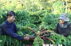 Coffee firms expand Asian markets through Singapore
