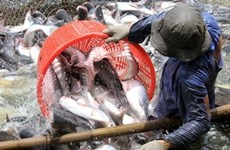 23 Vietnamese firms eligible to export tra catfish to US