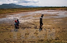 Proper irrigation helps Mekong Delta cope with water crisis