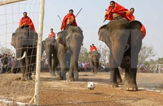 Elephants race in cultural festival in Buon Don